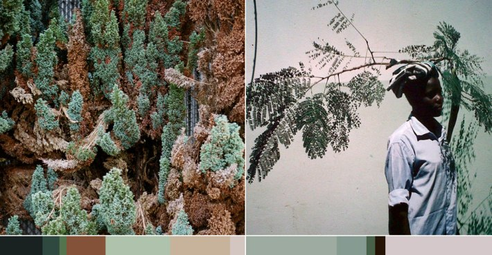 Color Palette Exploration: Nature: Pattern and Color Inspiration