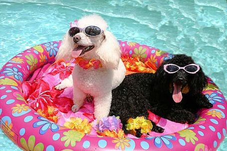 We will soon be maxin' and relax' over the summer by the pool looking cool.